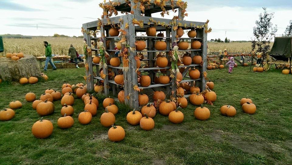 Image: Calgary Corn Maze & Fun Farm via Facebook