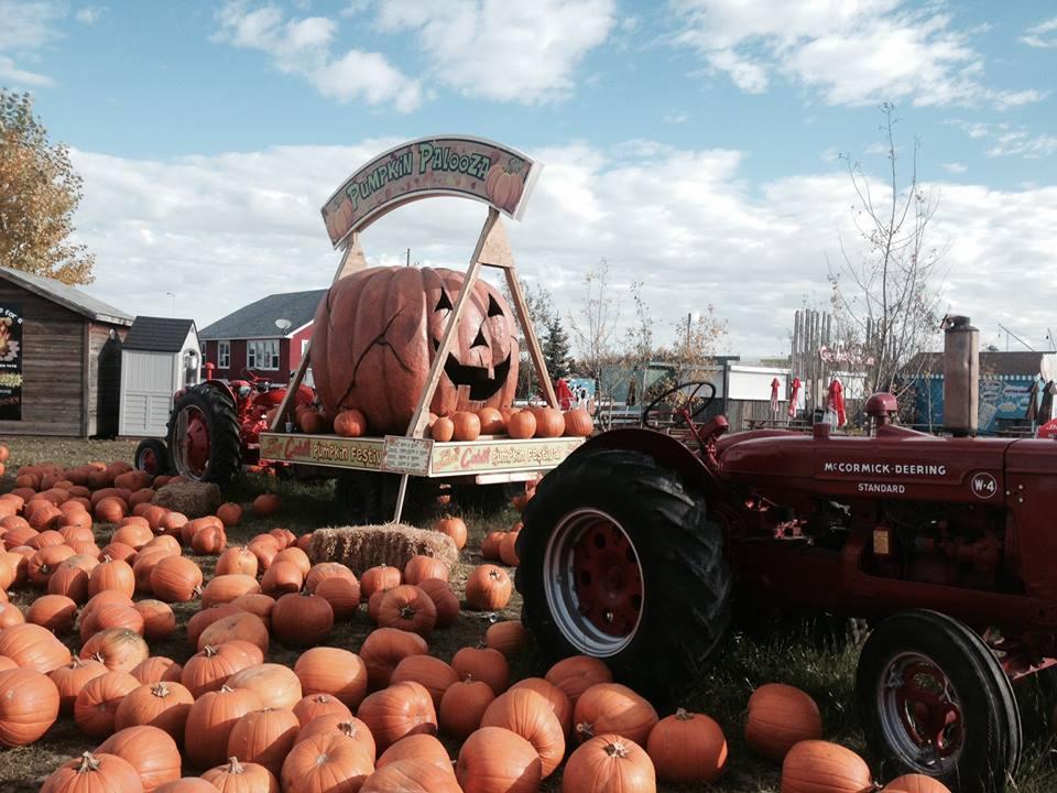 Image: Cobb's Corn Maze & Family Fun Park via Facebook