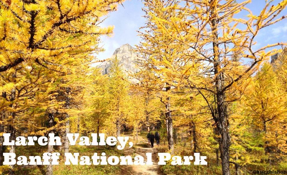 Larch Valley, Banff National Park - Buzz Bishop