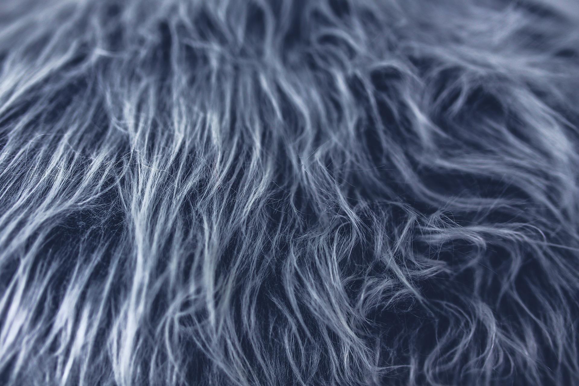 Image: Fur via Pixabay