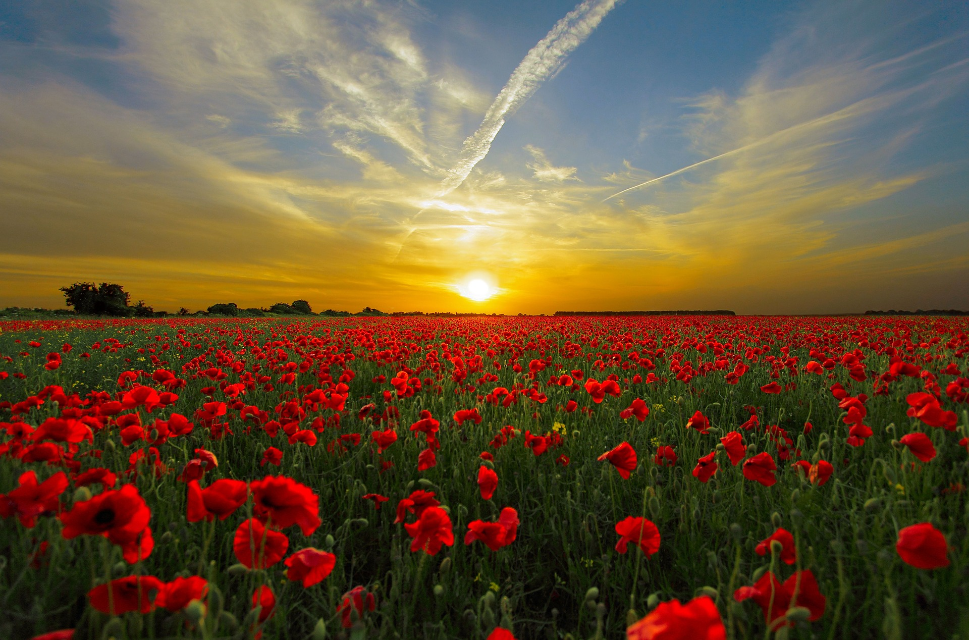 Image: Poppies via Pixabay