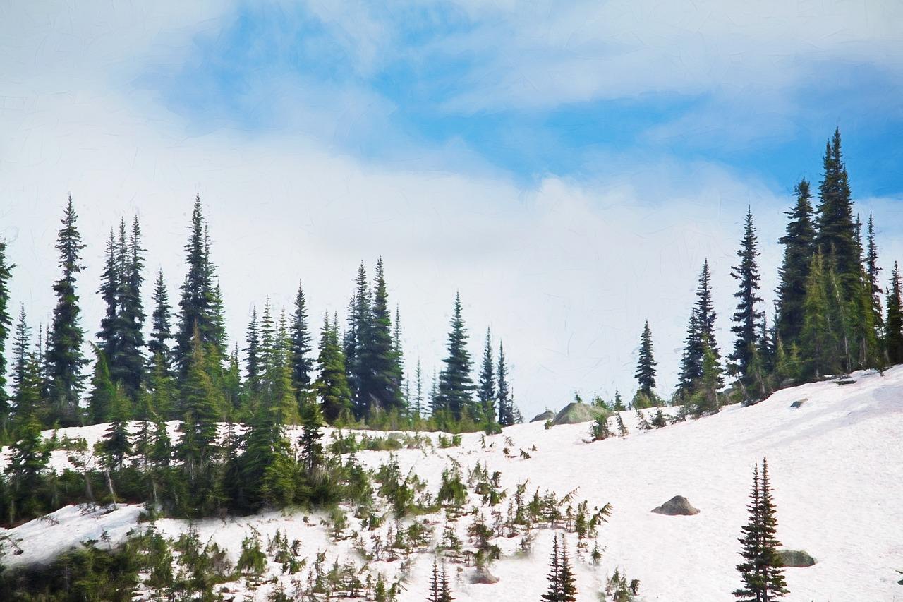 Image: Forest via Pixabay