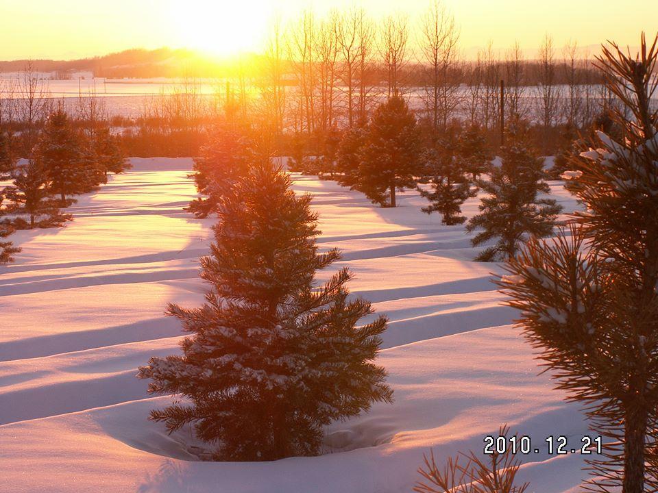 Image: Raven Ridge Tree Farm via Facebook