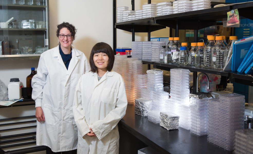 Associate Professor in the Department of Biological Sciences, Carrie Simone Shemanko, and PhD student YingYing Cong, have made a discover for the advancement of breast cancer treatment.