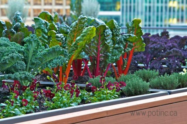 Vancouver Vegetable rooftop Garden