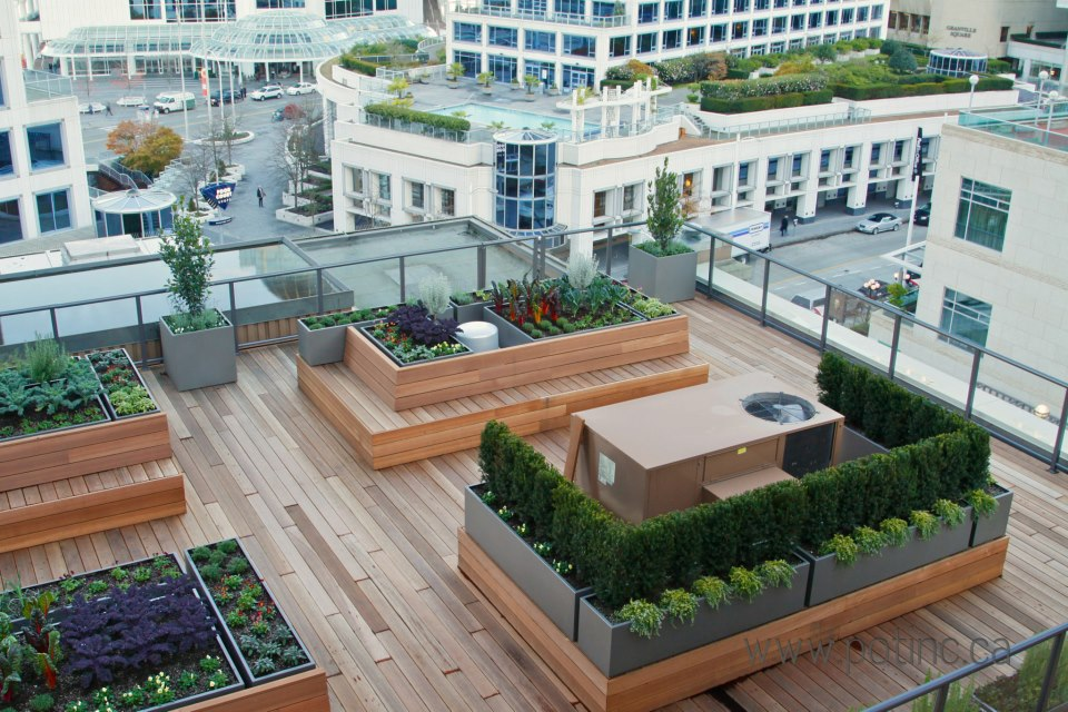 the vancouver club rooftop garden daily hive vancouver. Black Bedroom Furniture Sets. Home Design Ideas