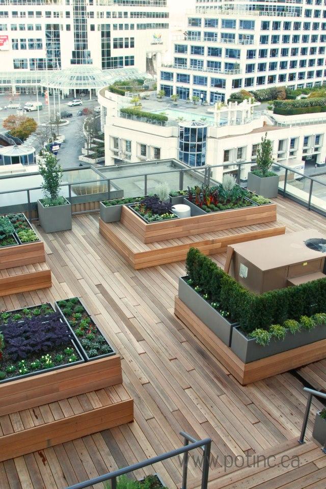 Rooftop veggie garden