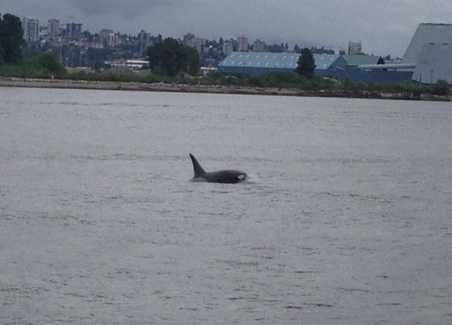 orca vancouver