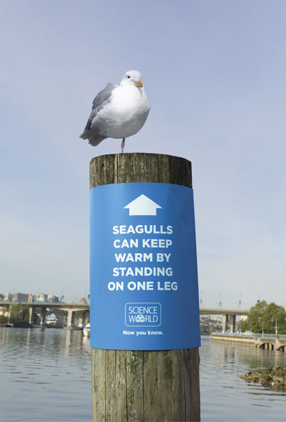 Science World Seagull