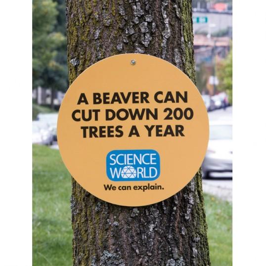 Science World Beaver Trees