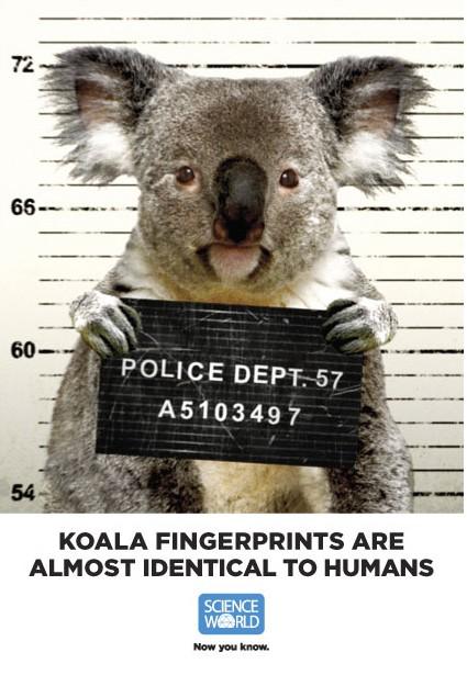 Science World Koala Fingerprints