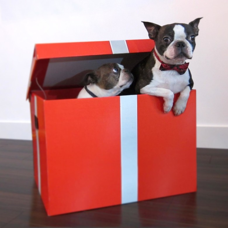 Ann Lu CTV Dogs