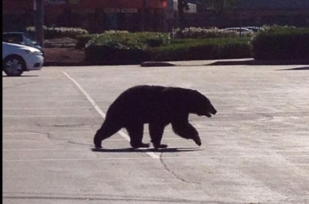 Black Bear Coquitlam Mall