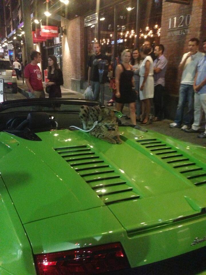 Exotic cat car