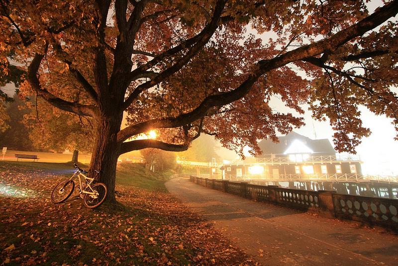 Fog Stanley Park