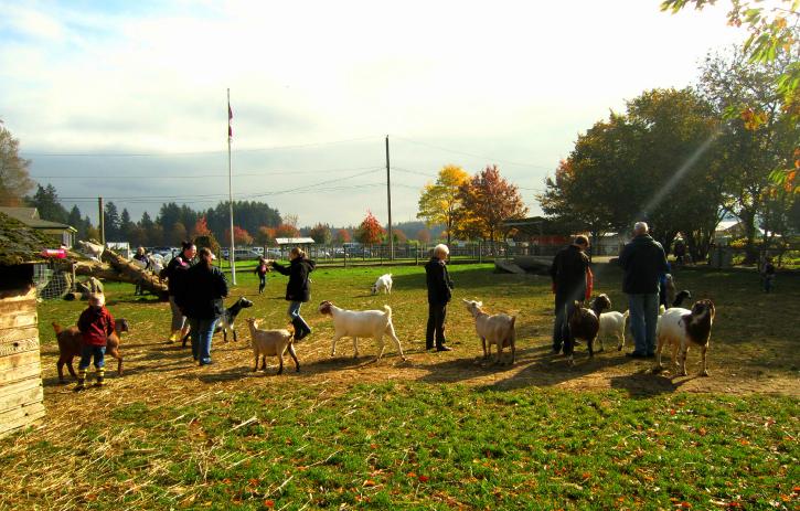 The Aldor Acres petting zoo.