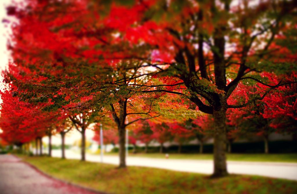 Vancouver fall colours