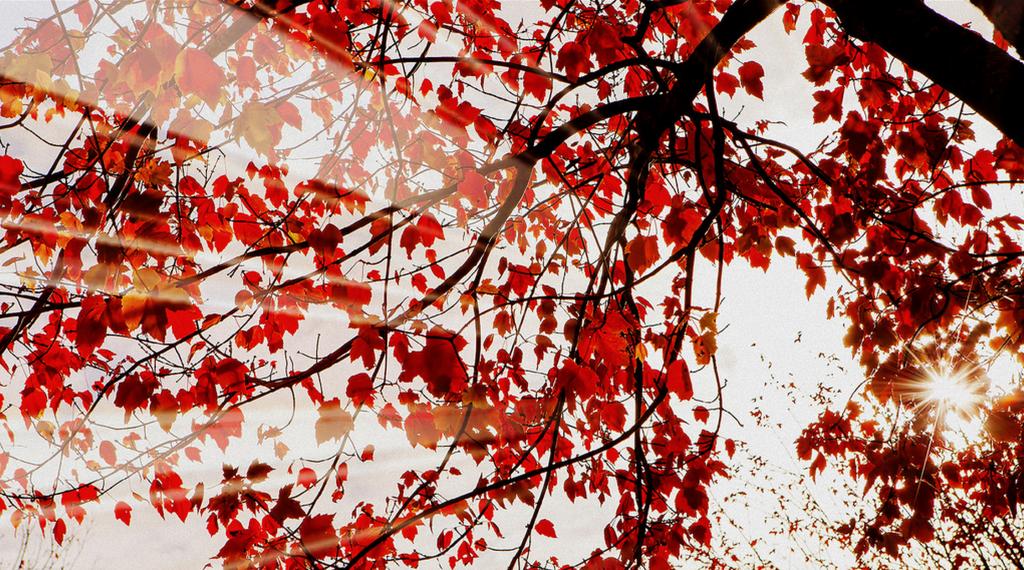 Screen Shot 2013-11-13 at 12.57.15 PM