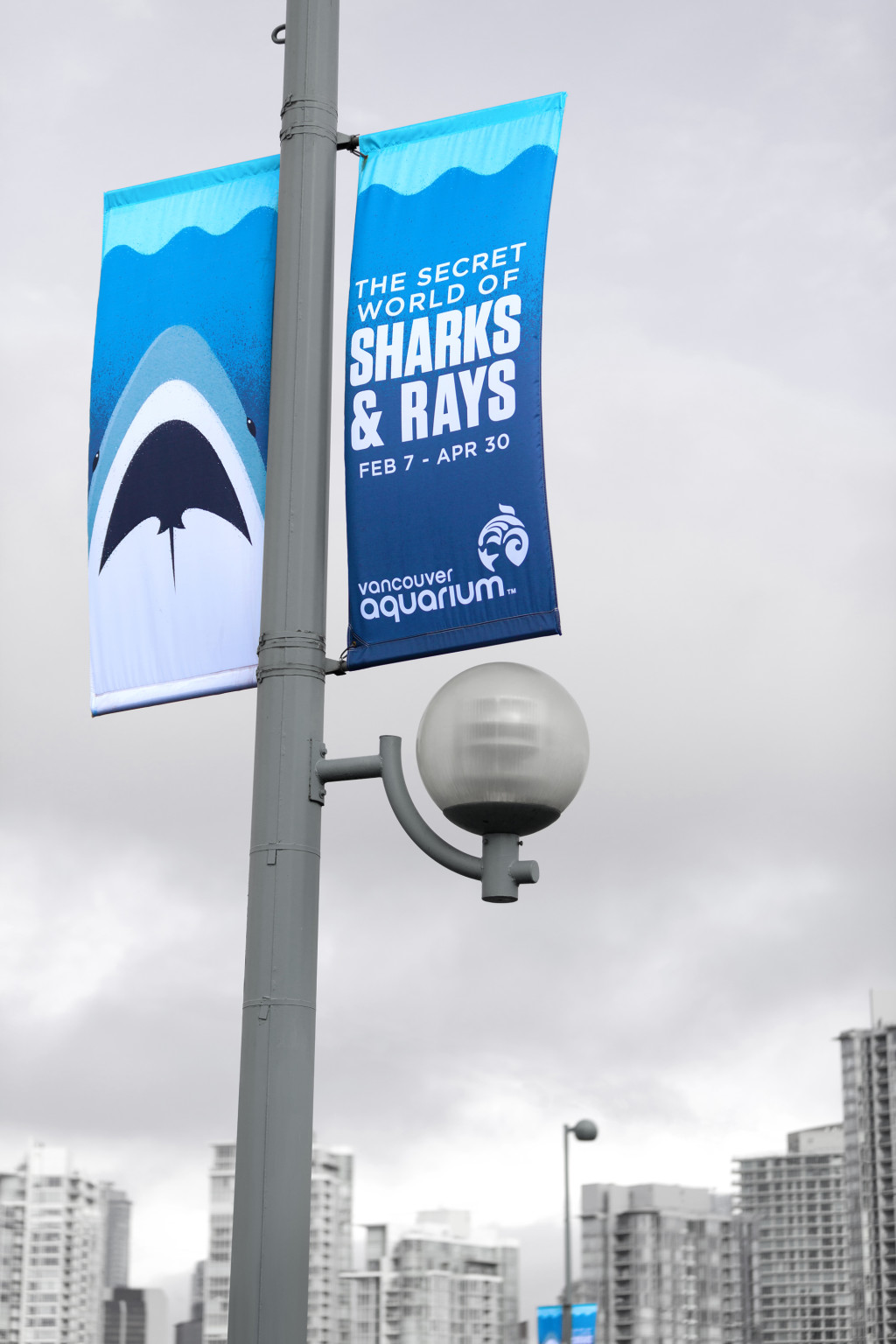 Sharks & Rays - Banners 1