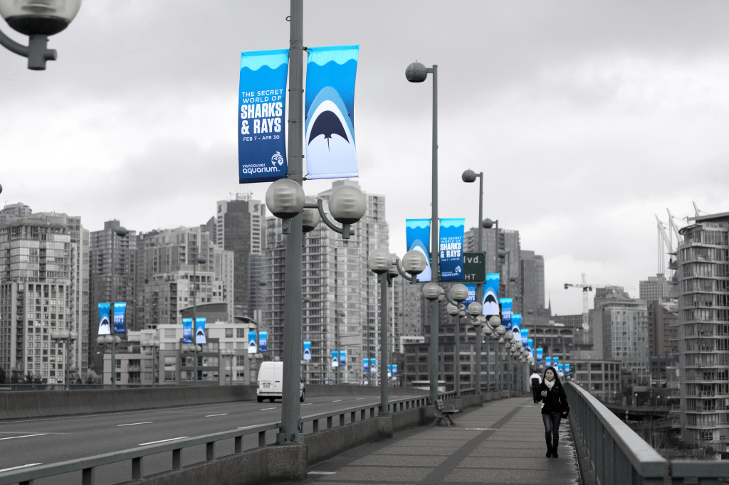 Sharks & Rays - Banners 2