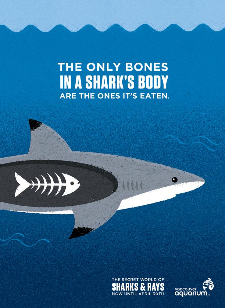 VAQ121027BC_2_NorthShoreN_Sharks&Rays