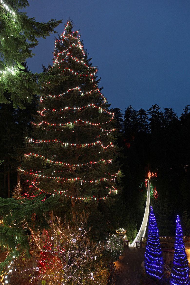 Canyon Lights To Be Home World039s Tallest Christmas Tree