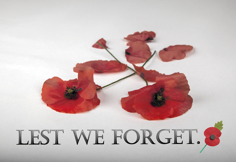 Poppies Remembrance Day Lest We Forget Stock