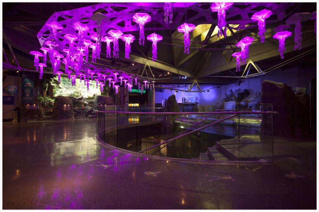Jelly Swarm vancouver aquarium Lorand Szasz