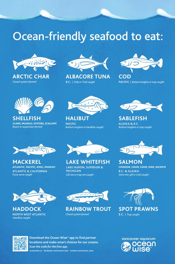 Ocean Wise Vancouver Aquarium