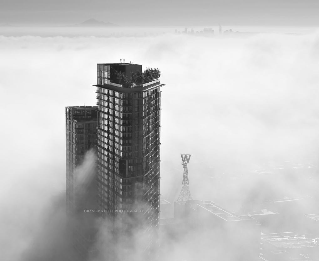 Woodwards fog