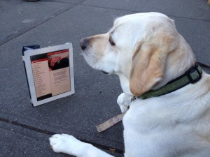 dog-with-app