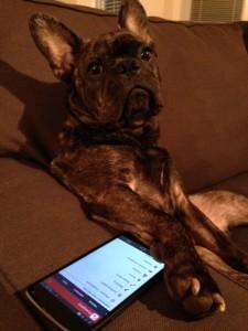 joshs-bulldog-armchair