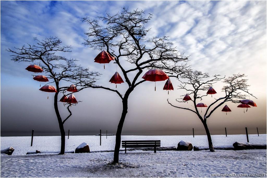 Rainblossom Project Red umbrellas Spanish Banks public art