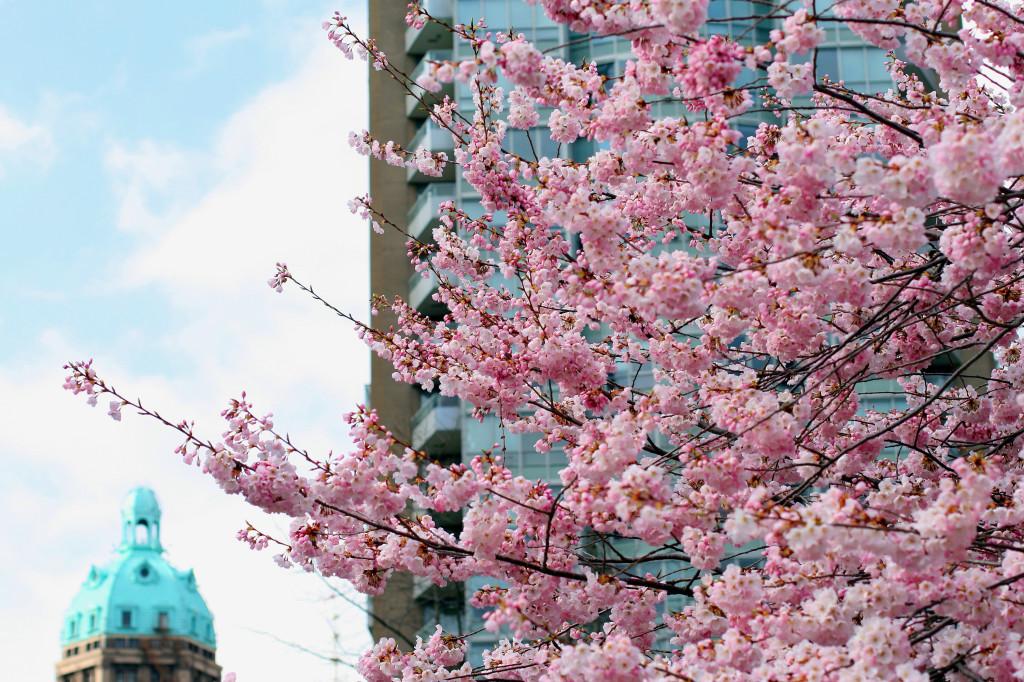 Vancouver Cherry Blossom Festival sun tower