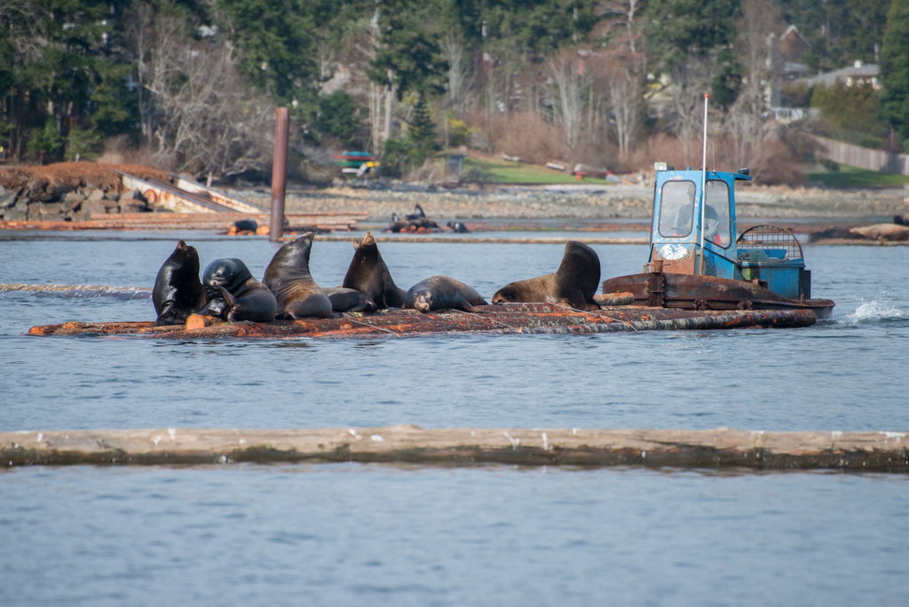 Vancouver Aquarium sea lion