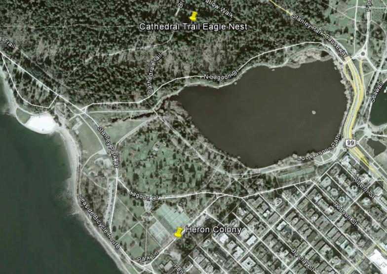 Pacific great blue heron bald eagle nest Vancouver Stanley Park map location