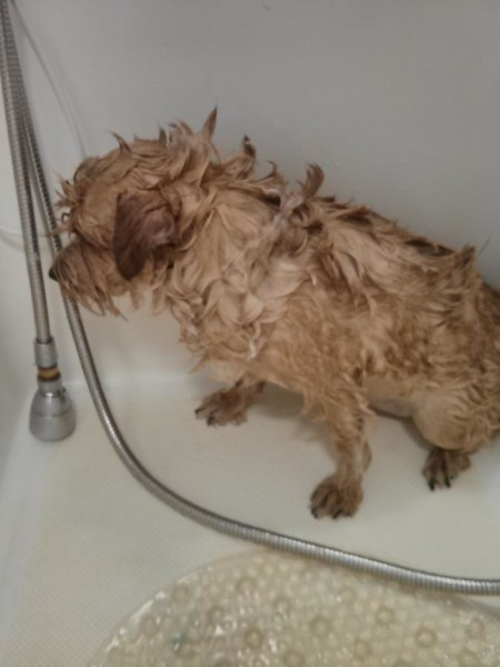 Murph getting his bath