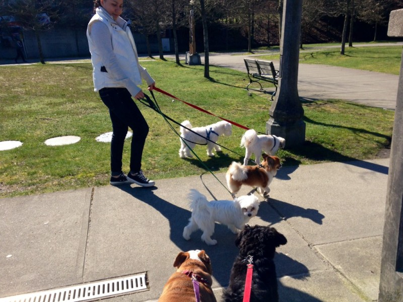 The wee ones at Stanley Bark take a stroll in Stanley Park