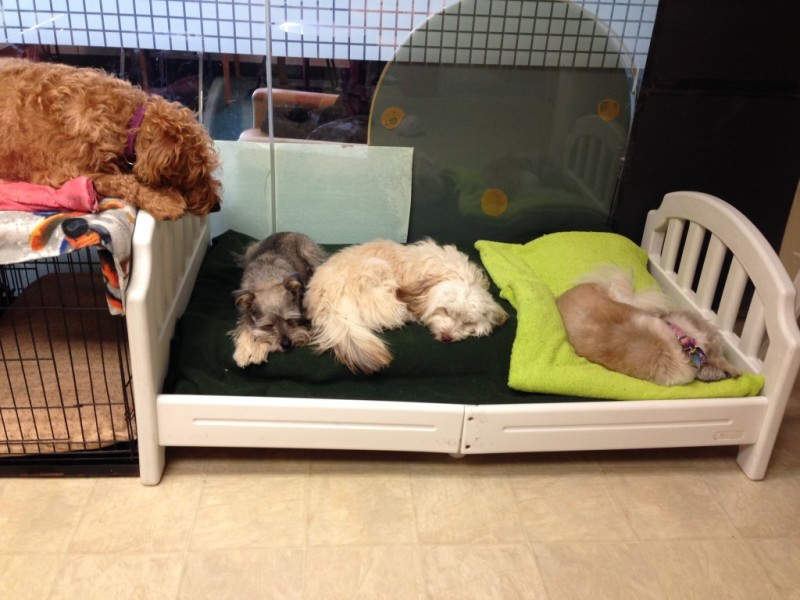 Small pups have a snooze at Heather's Place