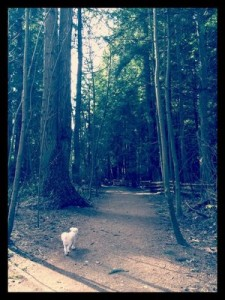 A dog enjoys a stroll in Pacific Spirit Park (Yelp photo).