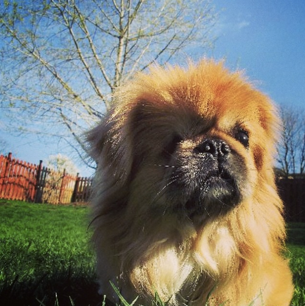 An adorable adoptable dog through the BarkBuddy app.