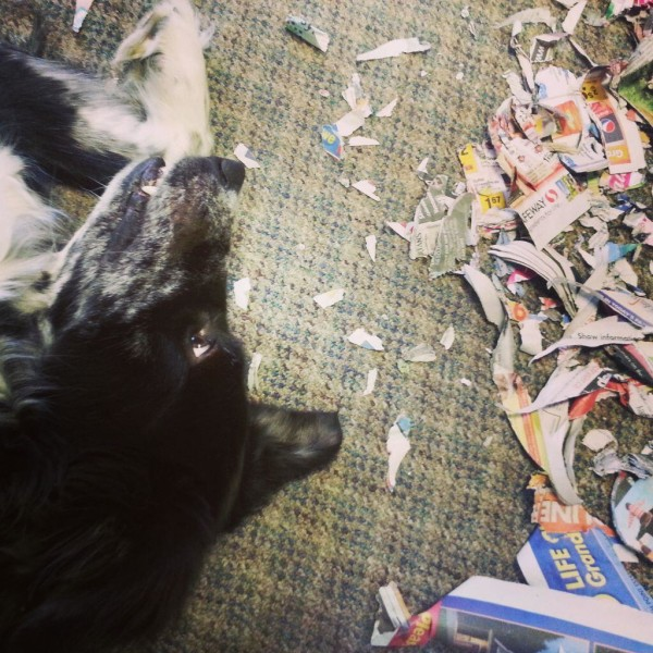 The office dog at Duolynx Print in Langley.