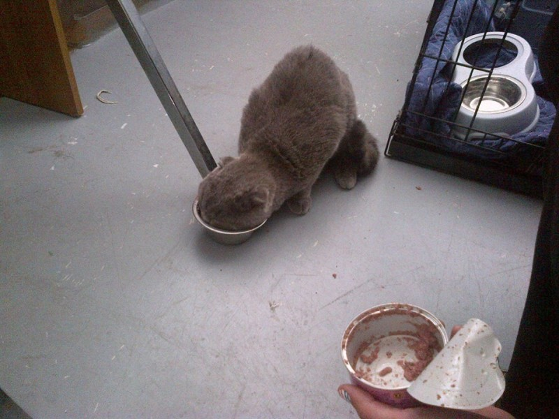 Chester has some cat food after being found at airport (Facebook).