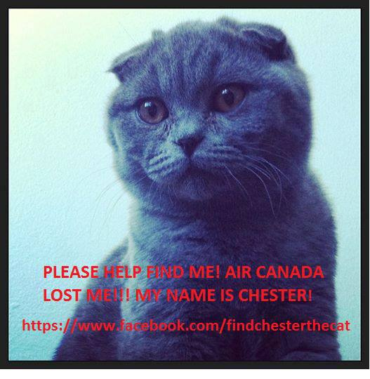 The social media push to find Chester.