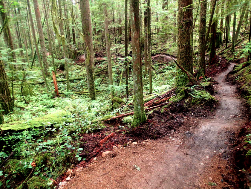 old buck trail