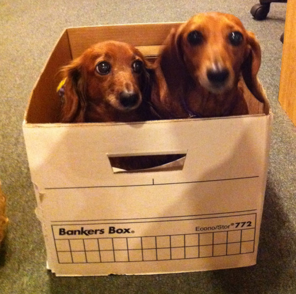 These two miniature Dachshunds – Rose and Esther - are a fixture at Modern Dog Magazine.