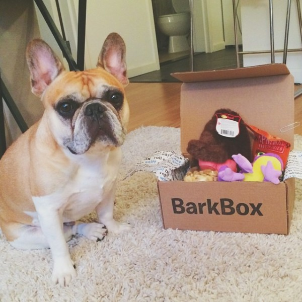 BarkBox Instagram account.