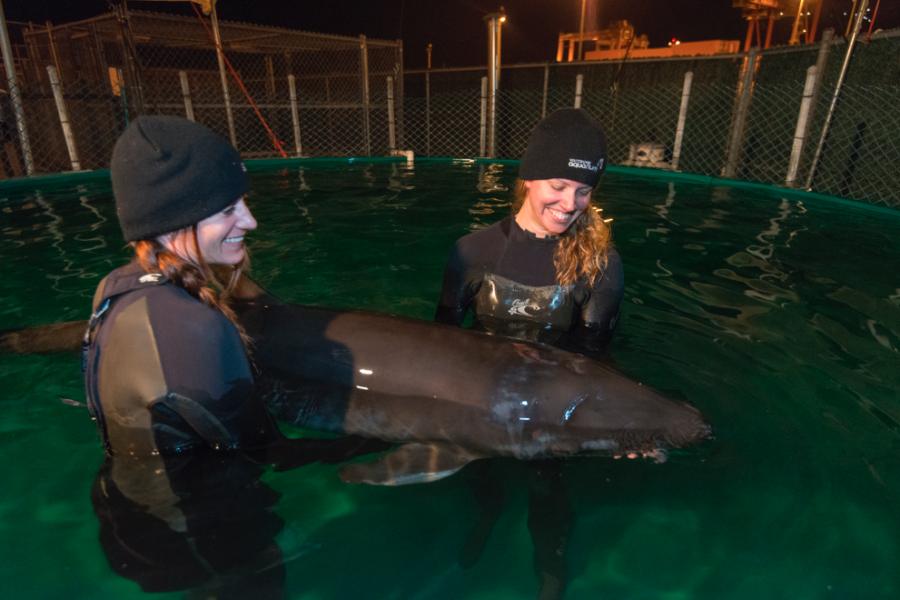 Image: Vancouver Aquarium