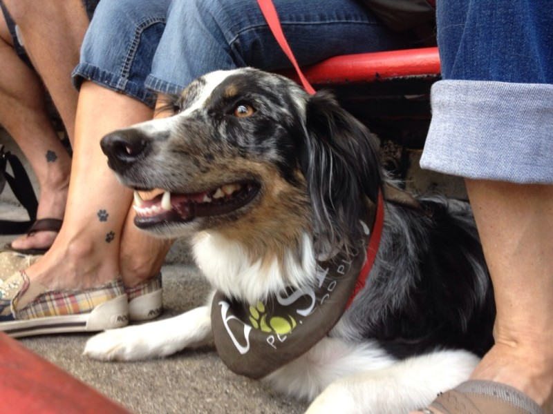 Vancouver Canadians Dog Days of Summer 2014.