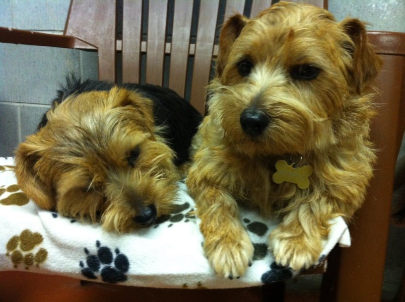 Knowlton Nash and Murphy Brown sharing a chair at Pipsqueak Pups.